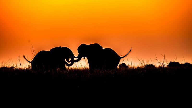 Afrika na mírů - Botswana