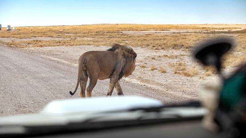 TAILORED TRIPS TO AFRICA-Nambie